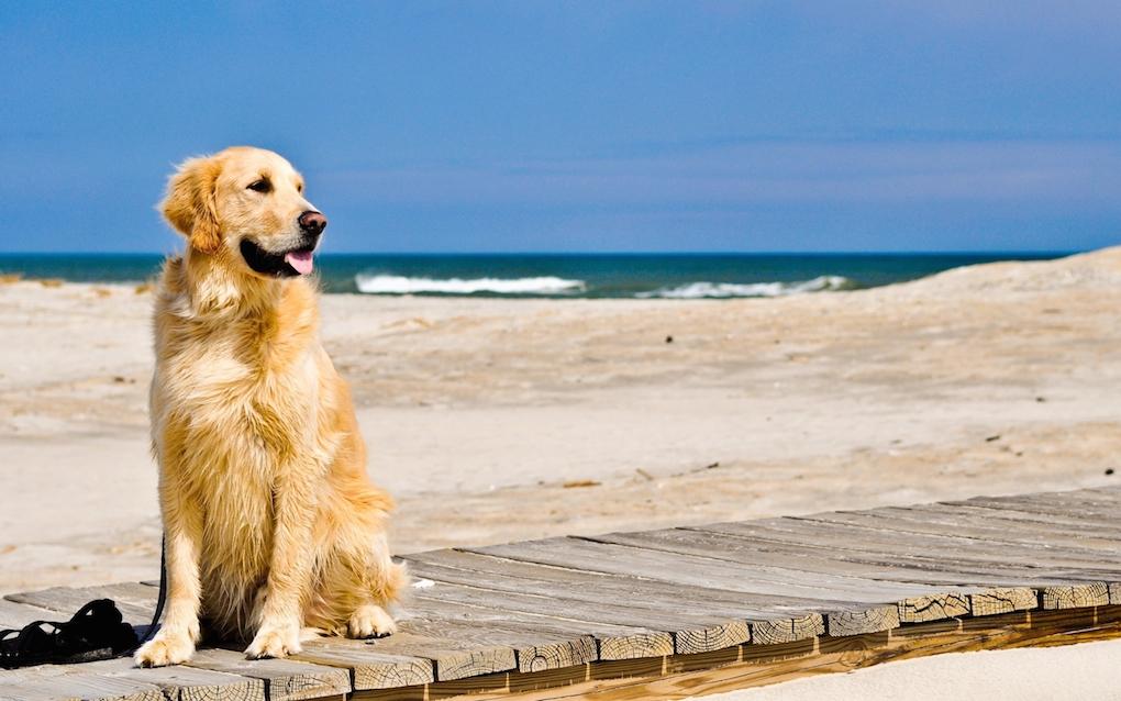 (Italiano) Costa Verde, spiagge riservate per cani e gatti